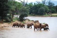 elefantes pozo de agua
