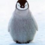 Penguin Update, el nuevo algoritmo antispam de Google