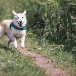 El mundo de las apps para mascotas
